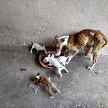 MP pede perícia para identificar maus-tratos em animais em Limeira