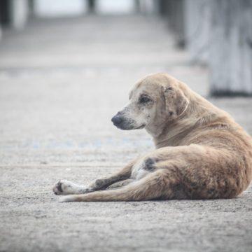Câmara de Limeira votará projeto que garante direitos aos animais comunitários