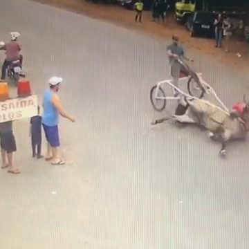 Polícia Civil investiga corrida e maus-tratos com cavalos em Cordeirópolis