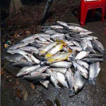 """Limeirense ostenta pesca de """"dourados"""" nas redes sociais e é multado"""