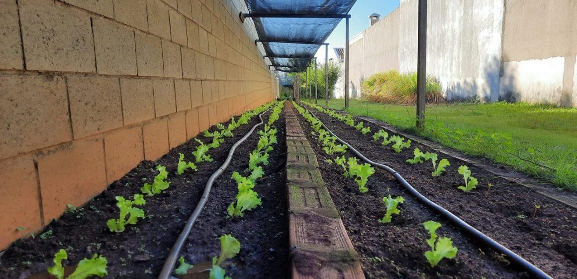 Vereador quer hortas comunitárias em áreas de gestão compartilhada em Limeira