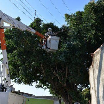 Limeira tem 2,3 mil árvores com problemas e que precisam ser substituídas