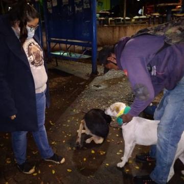 Cães encontrados nas ruas de Limeira recebem roupinhas de frio